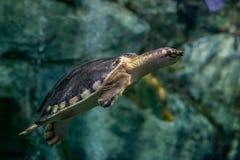 A vida marinha do mundo subaqu?tico, n?o tem que tomar imagem de stock royalty free