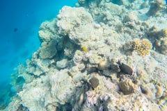 Vida marinha exótica perto da ilha de Maldivas Fotos de Stock