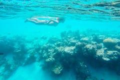 Vida marinha exótica perto da ilha de Maldivas Fotos de Stock Royalty Free