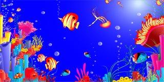 Vida marinha. medusa dos peixes, Mar Vermelho, estrela do mar Imagens de Stock