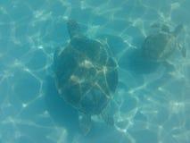 Vida marinha na água das Caraíbas imagens de stock royalty free