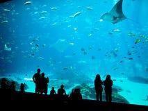 Vida marinha surpreendente Imagem de Stock