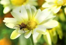 Vida na flor Imagens de Stock