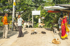 Vida na vila indiana Foto de Stock