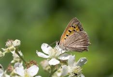 Vida natural; borboleta na natureza Fauna/conceito da flora imagens de stock