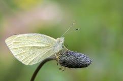 Vida natural; borboleta na natureza Fauna/conceito da flora fotografia de stock