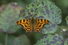 Vida natural; borboleta na natureza Fauna/conceito da flora fotografia de stock royalty free