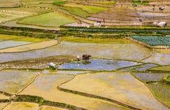 Vida nepalesa de la granja Imágenes de archivo libres de regalías