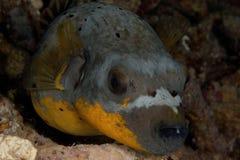 Vida no recife Imagem de Stock