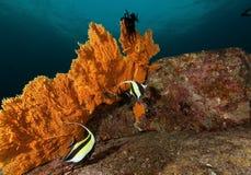 Vida no recife Imagens de Stock Royalty Free