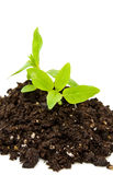 Vida nova com planta macia Fotografia de Stock Royalty Free