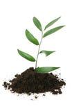 Vida nova (conceito do crescimento) Imagens de Stock