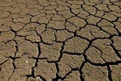 Vida nova na terra seca Fotografia de Stock