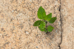 Vida nova que cresce no concreto Fotografia de Stock