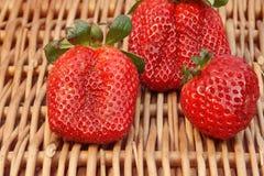 Vida orgánica de tres todavía fresas del verano fresco,  Imágenes de archivo libres de regalías