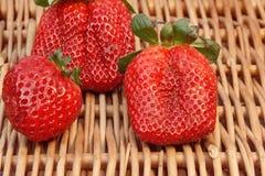 Vida orgánica de tres todavía fresas del verano fresco, backgro de XXXL Fotos de archivo libres de regalías
