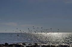 Vida pelo litoral no Mar Negro Nessebar, imagem de stock royalty free