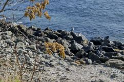 Vida pelo litoral no Mar Negro Nessebar, imagens de stock