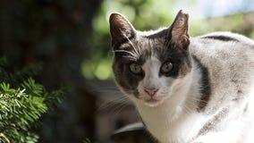 Vida perdida de los gatos Fotografía de archivo libre de regalías
