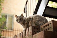 Vida perdida de los gatos Foto de archivo libre de regalías