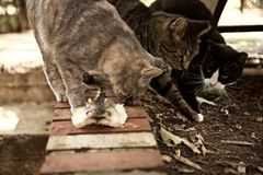 Vida perdida de los gatos Fotos de archivo libres de regalías