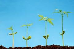 Vida quatro seedlingss-Nova Imagens de Stock