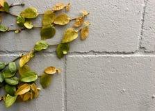 Vida que crece en una pared de ladrillo Fotos de archivo