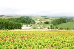 Vida rural Fotografia de Stock