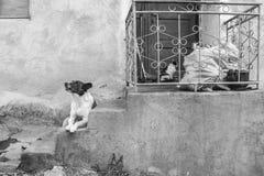 Vida rural na aldeia da montanha de Kosovo, Bulgária, fotografia preto e branco foto de stock royalty free