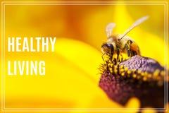 Vida sana de la palabra Foto del primer de un gathe occidental de Honey Bee Imagenes de archivo