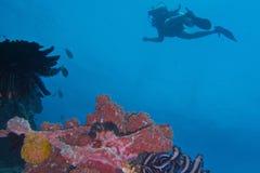 Vida saudável de Coral Reef fora da ilha de Balicasan, Filipinas Imagem de Stock Royalty Free