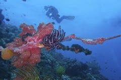 Vida saudável de Coral Reef fora da ilha de Balicasan, Filipinas Foto de Stock