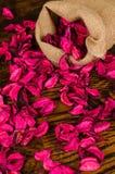Vida secada de los pétalos de la flor aún Imagen de archivo