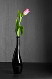 Vida selectiva del tulipán de la técnica del color aún Foto de archivo
