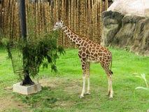 vida selvagem em seu grande habitat fotos de stock royalty free