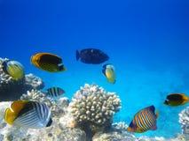 Vida subacuática foto de archivo