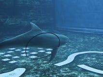 Delfín juguetón  Fotos de archivo