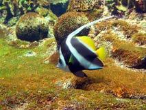 Vida subacuática Fotografía de archivo