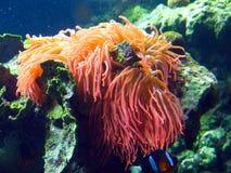 Vida marina tropical Foto de archivo libre de regalías