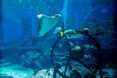 Vida subacuática del océano en el acuario enorme Fotos de archivo