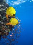 Vida subaquática Imagem de Stock