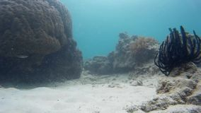 Vida subaquática agradável e peixes tropicais filme