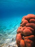 Vida subaquática do mar tropical Imagem de Stock