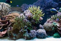 Vida subaquática, peixe, recife coral fotografia de stock