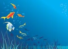 Vida subaquática. Peixes, alga Fotos de Stock Royalty Free