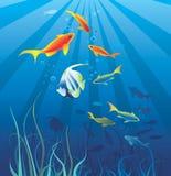 Vida subaquática. Peixes, alga ilustração royalty free