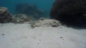 Vida subaquática tórrido & habitat marinhos video estoque