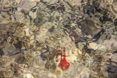 Vida subaqu?tica colorida Textura abstrata subaqu?tica foto de stock