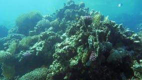 Vida submarina com recife de corais e peixes video estoque