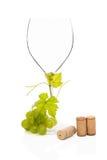 Vida todavía del vino blanco. Fotografía de archivo libre de regalías